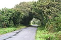 The Road to Drift - geograph.org.uk - 927442.jpg