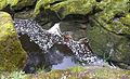 The Strid. - Flickr - gailhampshire.jpg