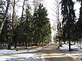 The path to Depo halt near the forest. February 2014. - Дорога к платформе Депо вдоль леса. Февраль 2014. - panoramio.jpg