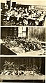 The teachers college quarterly (serial) (1916) (14596592510).jpg