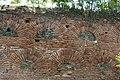 Thessaloniki, Westliche Stadtmauer (Τείχη της Θεσσαλονίκης) (4. Jhdt.) (32897974347).jpg