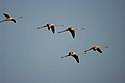 Thol Lake - Gujarat, India - Flickr - Emmanuel Dyan (21).jpg