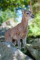 Tierpark Goldau (4980708340).jpg