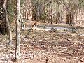 Tiger image28.jpg