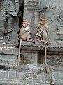 Tiruvannamalai temple - panoramio (1).jpg
