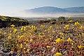 Titus Canyon - Flowers & Dust (3811768777).jpg