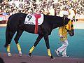 Tokyo Daishoten Day at Oi racecourse (31608691910).jpg