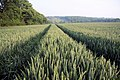 Tramlines in the wheat - geograph.org.uk - 827795.jpg