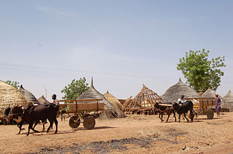 Transport in Niger - Horsecarts are a common sight on Niger's roads, like these near Diffa in far southeastern Niger.