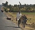 Transporting Firewood, Near Axum, Ethiopia (3173909305).jpg