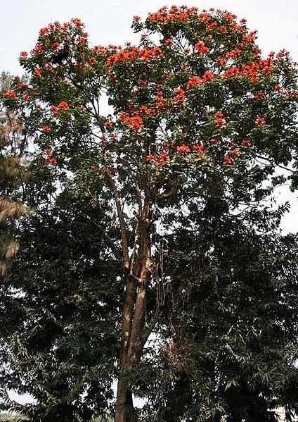 പ്രമാണം:Tree I IMG 2810.jpg