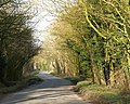 Tree lined road - geograph.org.uk - 361058.jpg