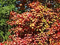 Tree of Many Colors, Oak Glen, CA 11-8-14a (15177001113).jpg
