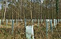 Tree shelters in a forest, Emmendingen, Baden-Württemberg, Deutschland, 2015-04-10 162646.jpg