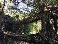 Treebridge1.jpg