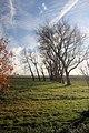 Trees at Wenny Farm - geograph.org.uk - 1052156.jpg