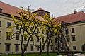 Trees outside Wawel Castle april 2014.jpg