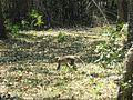 Trekking @ Wayanad wildlife Sanctuary - panoramio (2).jpg
