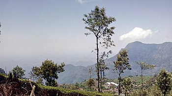 Tress and mountaisn tall alike-A different view.jpg