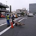 Tsukiji Fish Market (2678116377).jpg