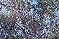 Tumacacori NHS DSC 0851 (15667365341).jpg