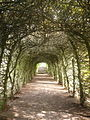 Tunnel of Trees - geograph.org.uk - 1032449.jpg