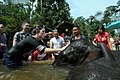 US Navy 080820-N-4009P-267 Boatswain's Mate 3rd Class Neenah Jones along with other Sailors and tourists, washes a young Asian elephant's head at the Kuala Gandha Elephant Conservation Center.jpg