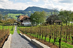 Ufenau - Vineyards and restaurant as seen from the north