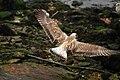 Um susto e.... um vôo... - A Scare and a flight (4916223282).jpg