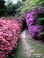 Valley Gardens (5679836427).jpg