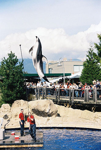 Pacific white-sided dolphin - Image: Vancouver aquarium dolphin