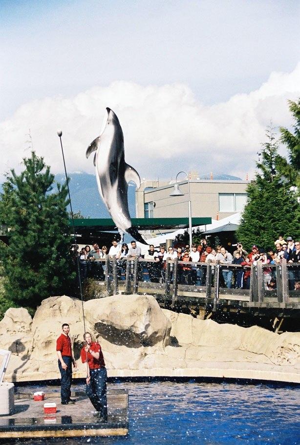 Vancouver aquarium dolphin
