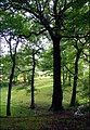 View Out of Bagnall Woods - geograph.org.uk - 528011.jpg