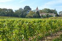Vignes à Choulex (2).JPG