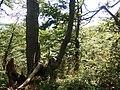Vihorlatské vrchy, cesta z Troch tablov na Jedlinku (4).jpg