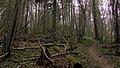 Vikmestes pilskalns, Sigulda 04.jpg