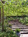 Vine covered terrace (3575982951).jpg