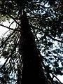 Vue arbre bois-chateau01 Clermont-en-Genevois.jpg