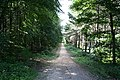 Wadworth Wood - geograph.org.uk - 487815.jpg