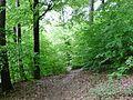 Waldweg - panoramio (12).jpg