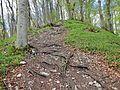 Waldweg - panoramio (43).jpg