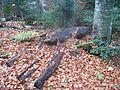 Wanderung im November - panoramio (8).jpg