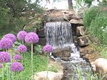 Waterfall and Flowers, OP Arboretum.jpg