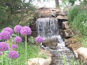 Waterfall and Flowers, OP Arboretum