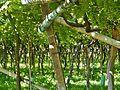 Wein - panoramio (2).jpg