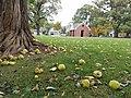 Westover Park (31060340445).jpg