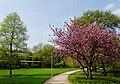 Wiese im Florapark in Duesseldorf-Unterbilk, von Suedosten.jpg