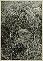 Wild nature's ways (1903) (14770558453).jpg