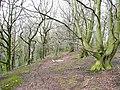 Woodland, Litherop Lane, High Hoyland - geograph.org.uk - 726107.jpg