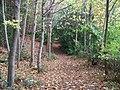 Woodland footpath - geograph.org.uk - 1552509.jpg